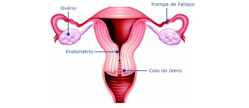 Sistema Reprodutor Feminino